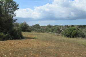 BUILDING PLOT NEAR THE HARBOUR CALA D'OR